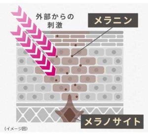 メラニンが生成されるイメージ図